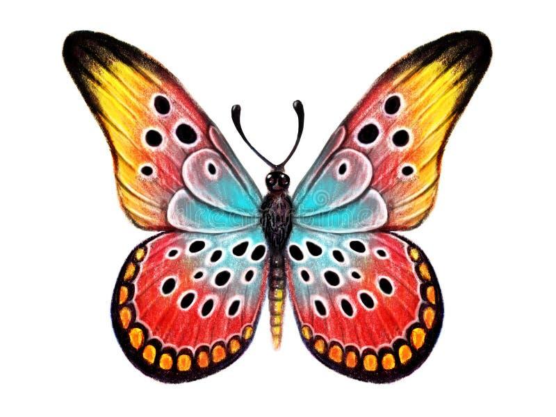 Hand gezeichneter Schmetterling auf weißem Hintergrund lizenzfreie stockfotografie
