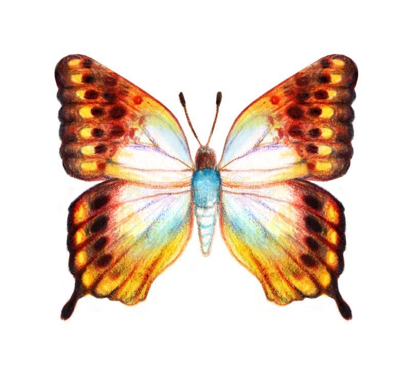 Hand gezeichneter Schmetterling auf weißem Hintergrund stockfoto