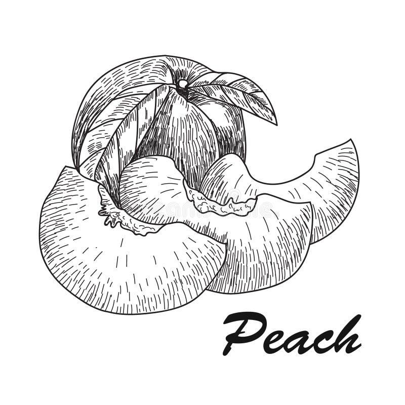 Hand gezeichneter Skizzenartpfirsich Reifer ganzer Pfirsich und Pfirsichviertel frischer Bauernhof trägt Vektorillustration Früch lizenzfreie abbildung