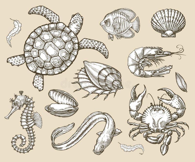 Hand gezeichneter Skizzensatz Meeresfrüchte, Seetiere Auch im corel abgehobenen Betrag lizenzfreie abbildung