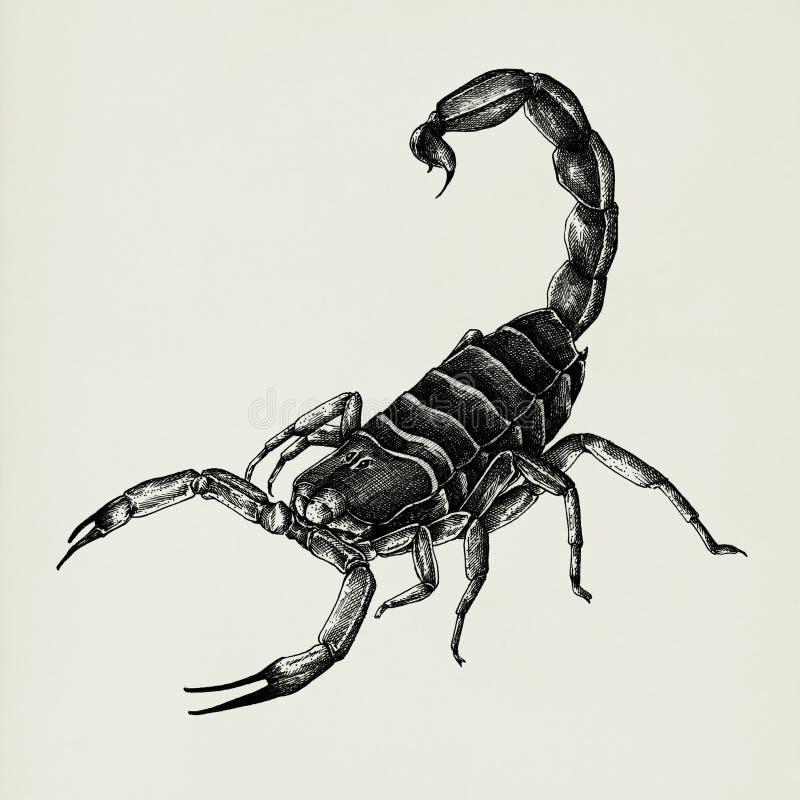 Hand gezeichneter Skorpion lokalisiert auf Hintergrund stock abbildung