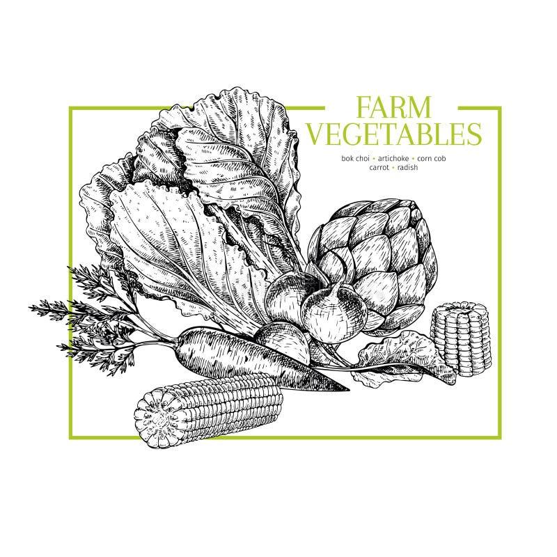 Hand gezeichnetes Bauernhofgemüse Chinakohl, Artischocke, Maiskolben, Karotte, Rettich Vektor gravierte Illustration landwirte lizenzfreie abbildung