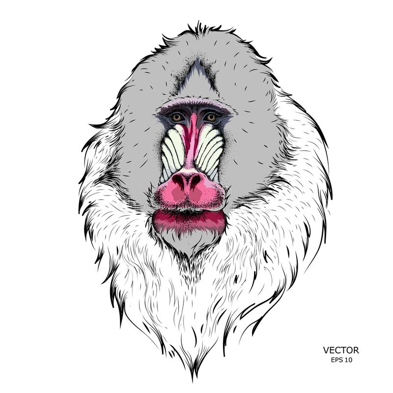 Hand gezeichnetes Mandrillporträt auf Stammes- Art Vektor illus stock abbildung