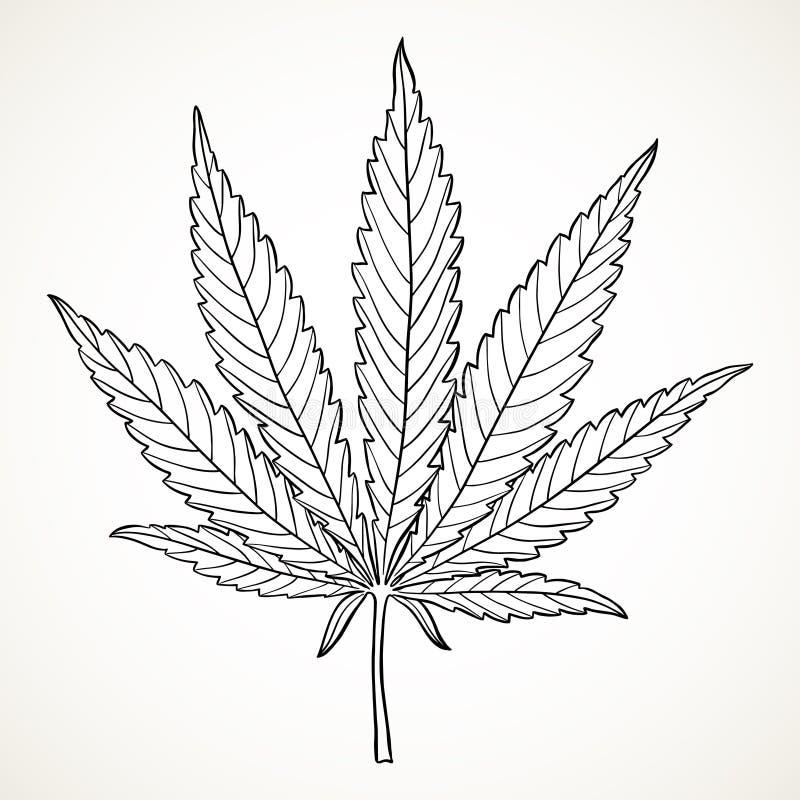 Hand gezeichnetes Marihuanablatt stock abbildung