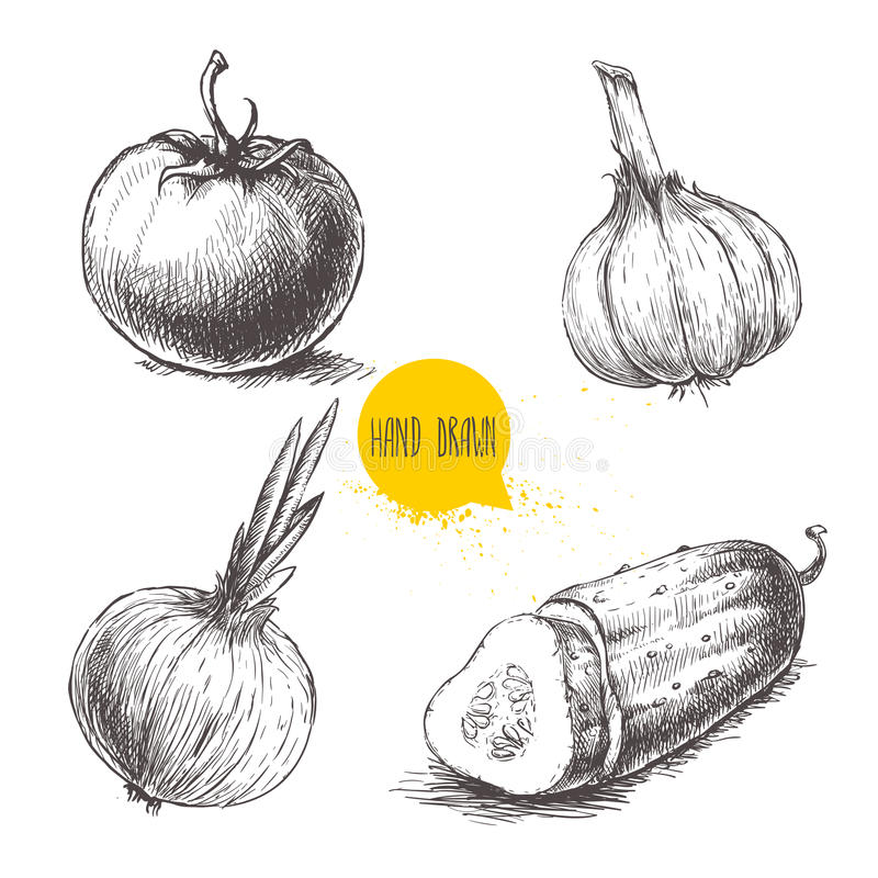 Hand gezeichnetes Skizzenartgemüse eingestellt Tomate, Zwiebel, schnitt Gurke und Knoblauch stock abbildung