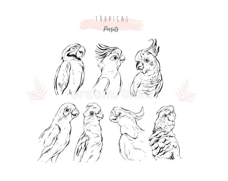 Hand gezeichnetes Vektorgraphik Zeilendarstellungssammlungssatz tropische exotische Paradiesvogelpapageien lokalisiert auf Weiß lizenzfreie abbildung