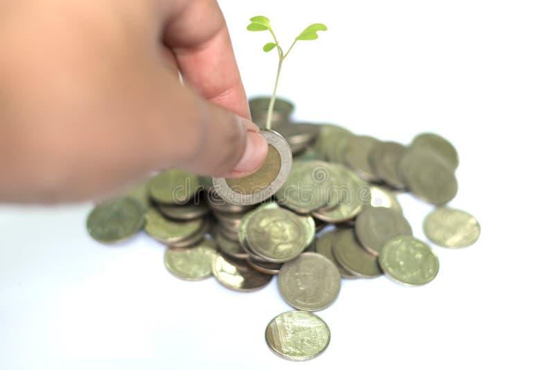 Hand gezette muntstukken aan stapel muntstukken op witte achtergrond stock afbeeldingen