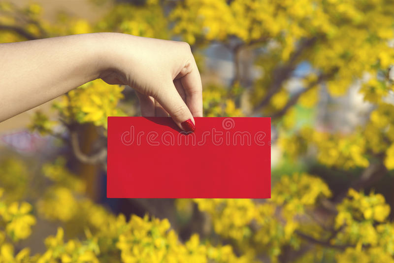 Hand give money in red envelopes - ang pow or red packet to some. One for Chinese New Year / Tet Holiday on nature yellow flowers background - Hoa Mai tree Ochna royalty free stock photo