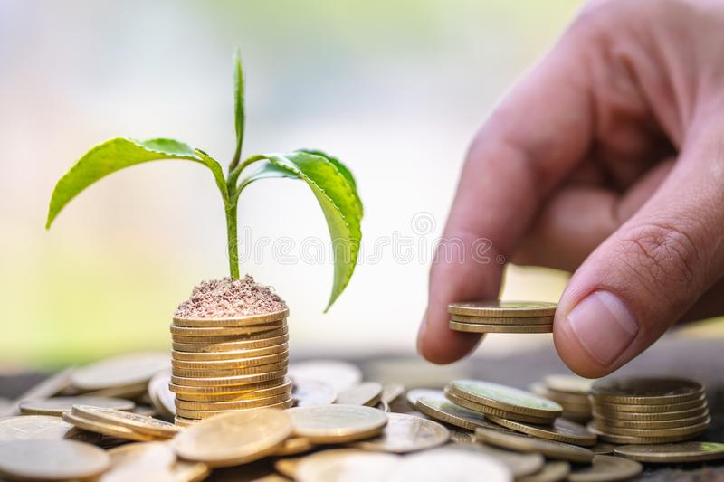 Hand giving a coin to a tree growing from pile of coins.Plant Growing In Savings Coins Money. Financial accounting, Investment royalty free stock photography