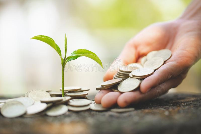 Hand giving a coin to a tree growing from pile of coins.Plant Growing In Savings Coins Money. Financial accounting, Investment stock photography