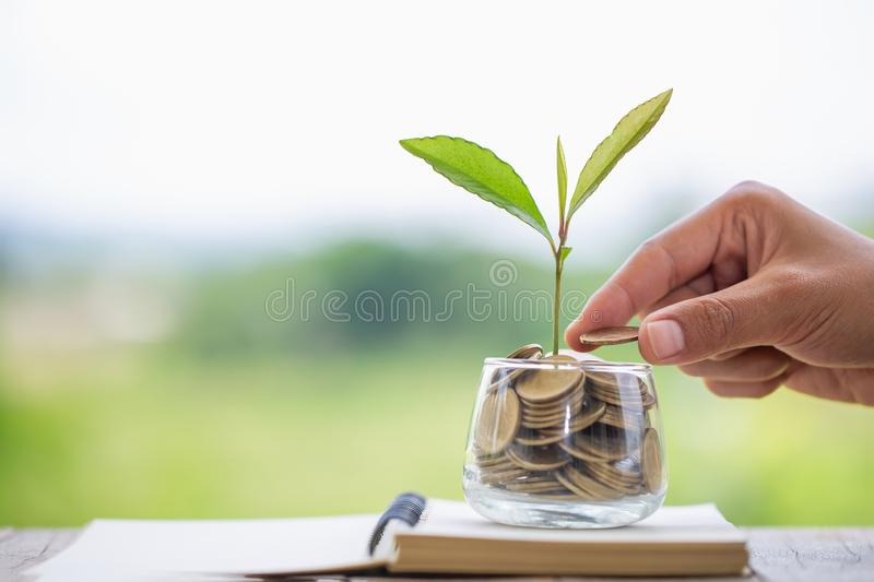 Hand giving a coin to a tree growing from pile of coins.Plant Growing In Savings Coins Money. Financial accounting, Investment royalty free stock image