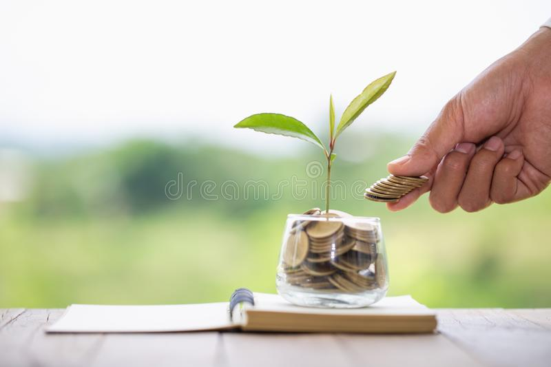 Hand giving a coin to a tree growing from pile of coins.Plant Growing In Savings Coins Money. Financial accounting, Investment royalty free stock images