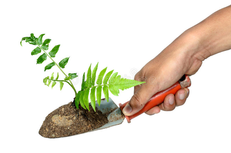 Hand grip a gardening trowel and plant on a isolate. royalty free stock photos