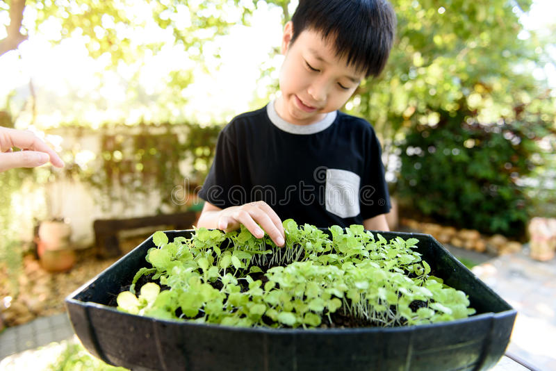 Hand harvesting green plant. stock photos
