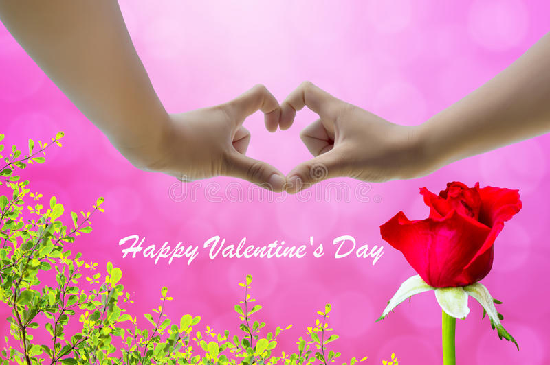 Hand on heart-shaped ping background and rose on Valentine's Day. Pink background stock images