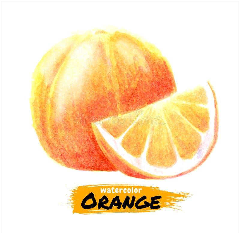 Hand het getrokken waterverf oranje schilderen op witte achtergrond Vectorillustratie van fruitsinaasappel royalty-vrije illustratie