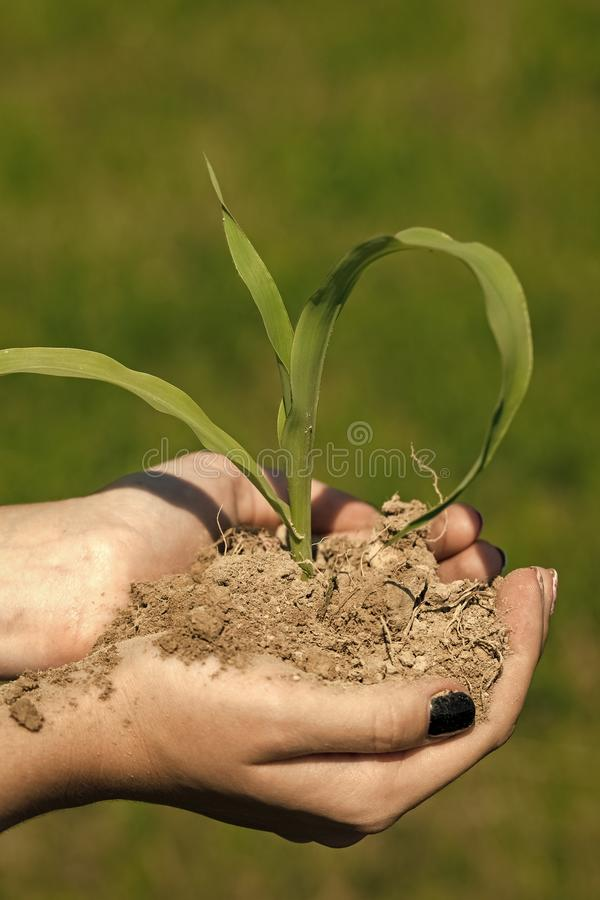 Hand hold sprout in ground, new life. stock images