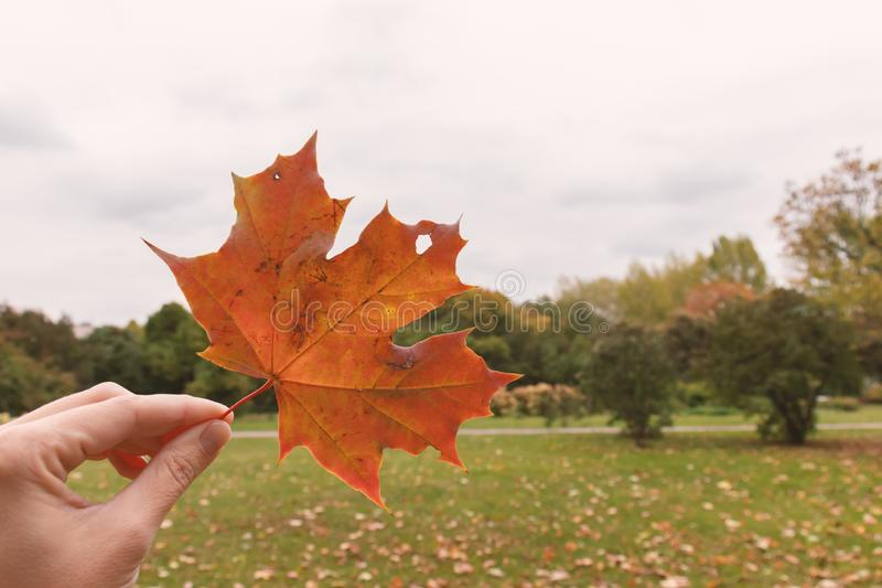 A hand holding autumn brown maple leaf on a gloomy sad park background, melancholy and depression concept, copy space royalty free stock photography