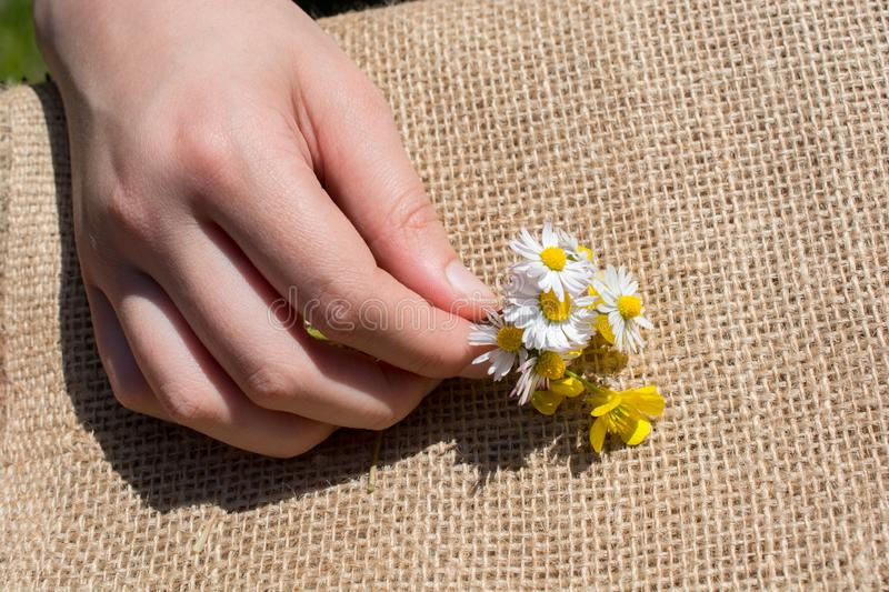 Amazing colorful Spring flowers in hand stock photos
