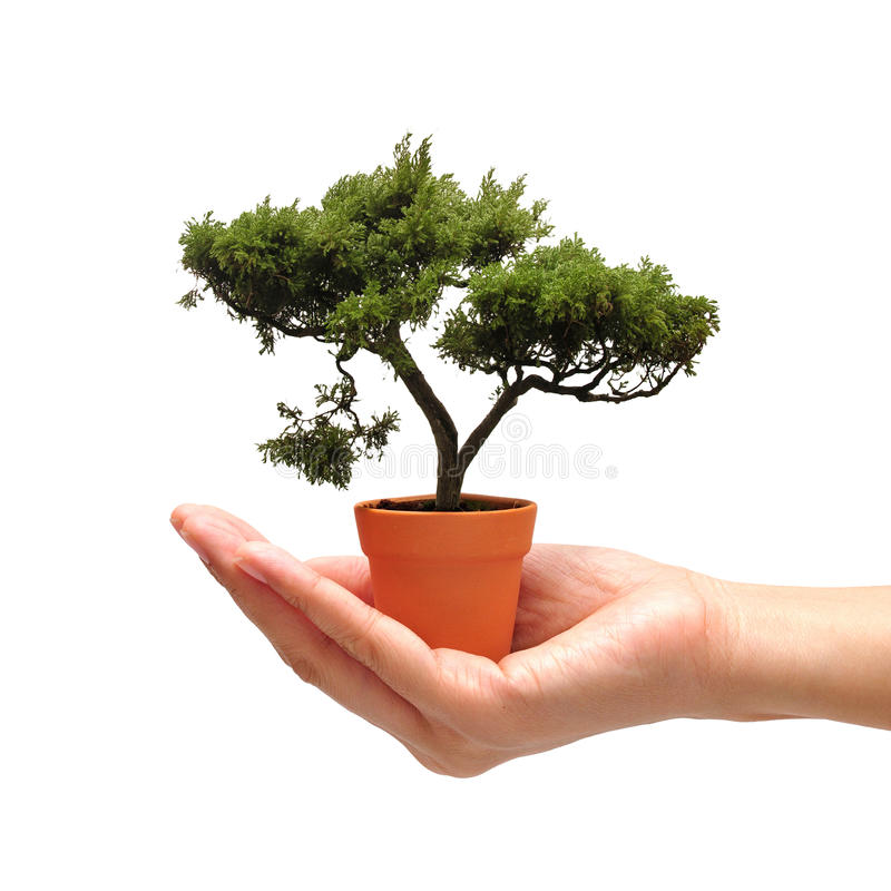 Hand holding bonsai tree in small pot on white background stock download hand holding bonsai tree in small pot on white background stock image image mightylinksfo