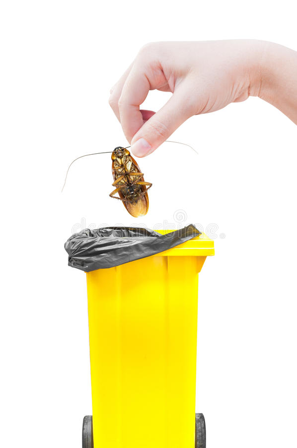 Hand holding brown cockroach and bin yellow Isolated on a white background stock images