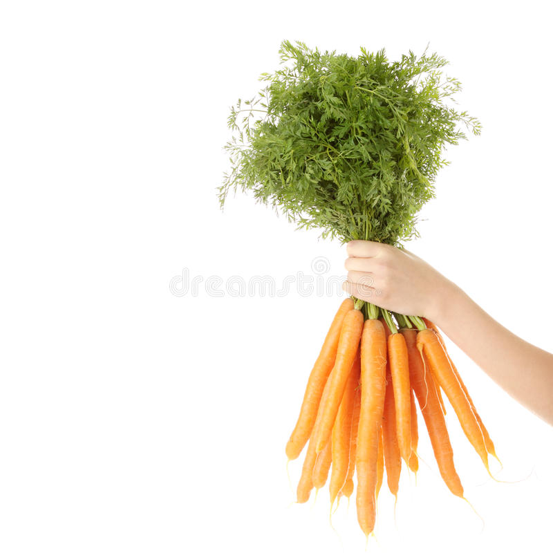 Download Hand Holding Bunch Of Orange Carrots Stock Image - Image: 12938649