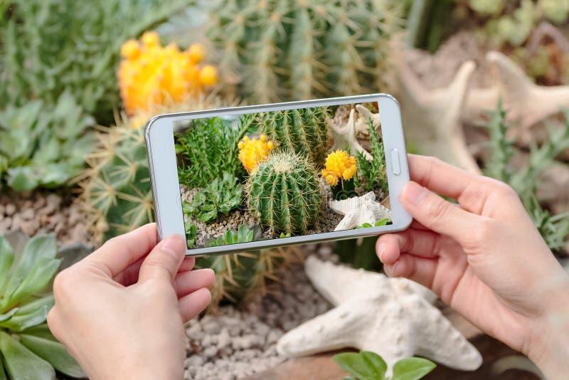 Hand holding camera taking photograph of cactus stock photos