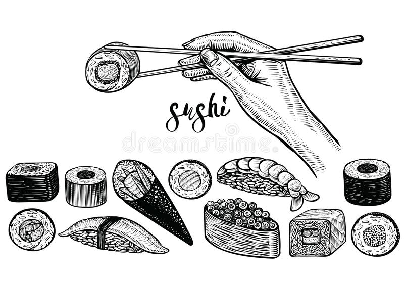 Hand holding chopsticks and sushi roll, vector line drawing. Japanese food species: maki, nigiri, gunkan, temaki. vector illustration
