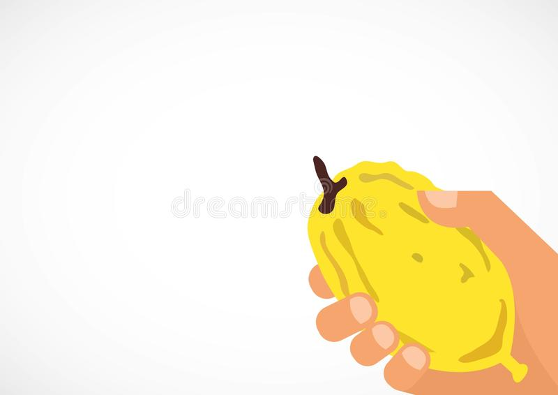 Hand holding a citron, Etrog in Hebrew. Religious Jews chooses ritual plant royalty free illustration