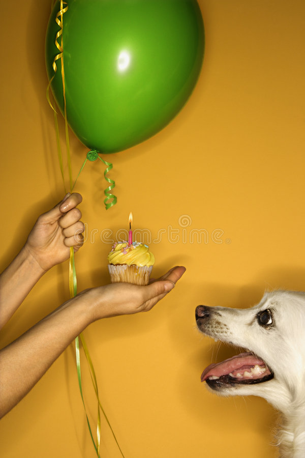 Hand holding cupcake with dog. royalty free stock images
