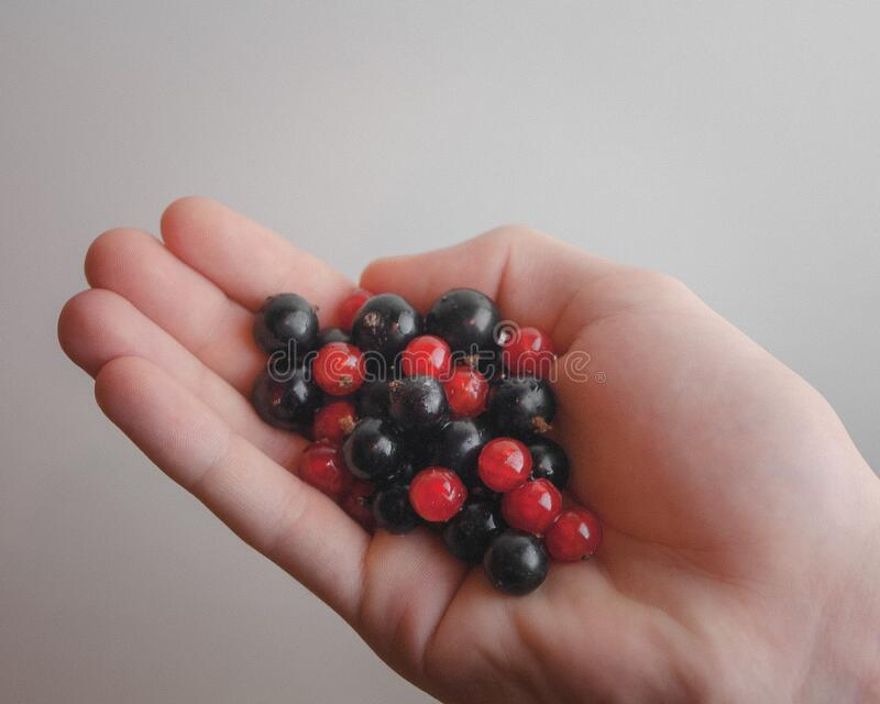 Hand holding currants royalty free stock photography