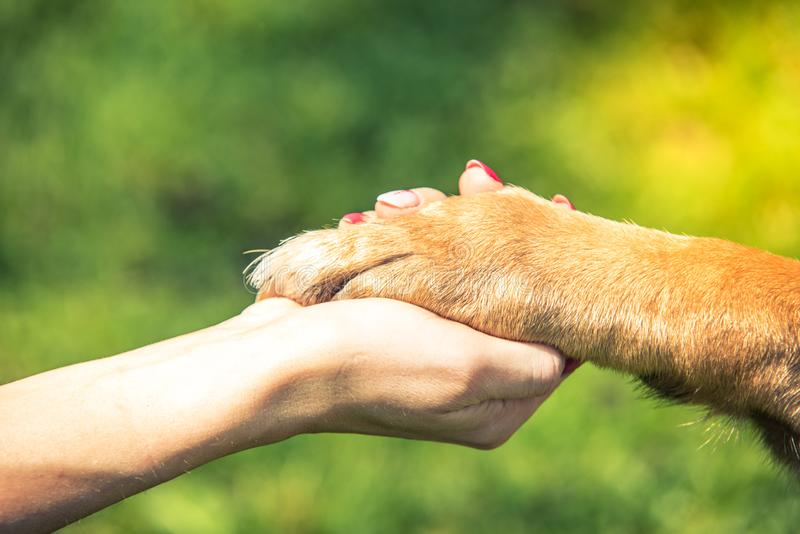 Hand holding dog paw, relationship and love concept.  royalty free stock photography