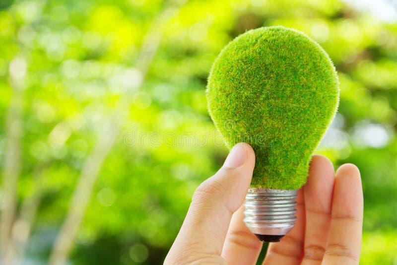 Hand holding eco light bulb royalty free stock photography