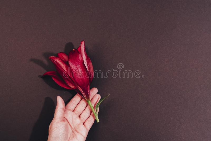 Hand holding exotic red flower top view background royalty free stock photography
