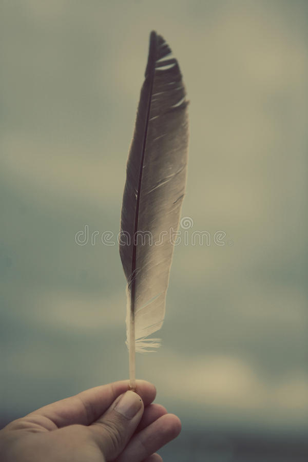 Hand holding feather stock photography