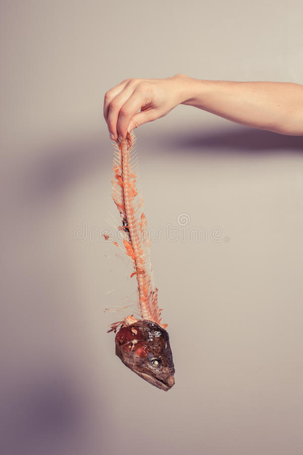 Hand holding fish skeleton stock image