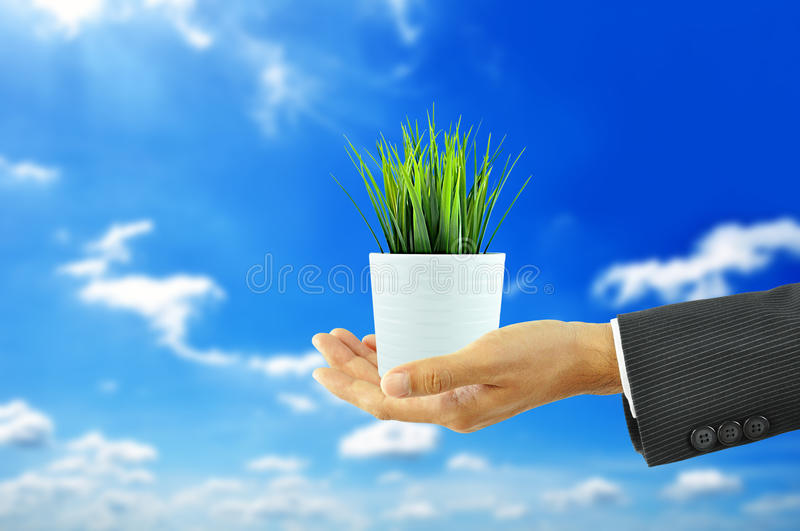 Hand Holding Flower Pot With Green Grass Royalty Free Stock Images