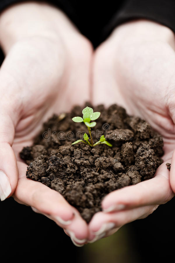 Download Hand Holding A Fresh Young Plant Stock Photo - Image: 15034580