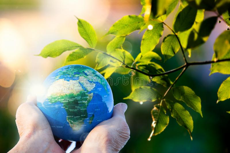 hand holding globe lush green leaves in background royalty free stock image