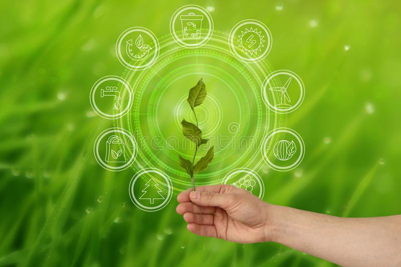 Hand holding a green branch on the background of environmental icons of nature conservation royalty free stock photo