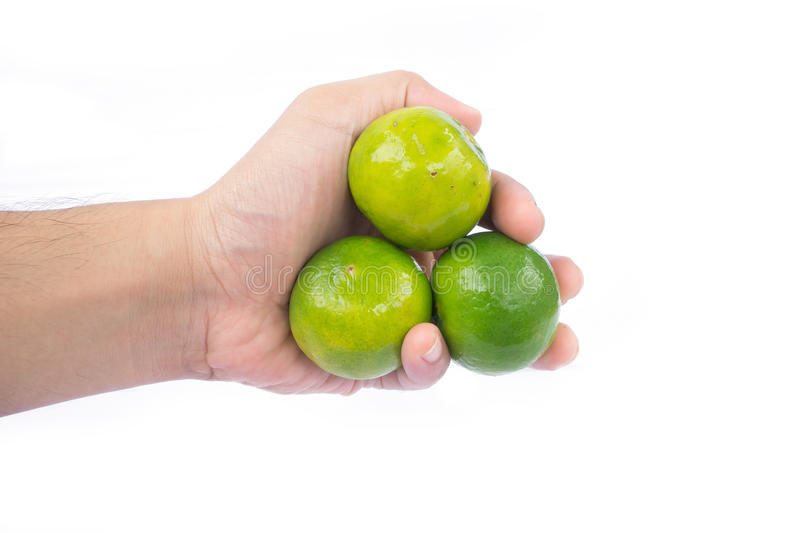 Hand holding green limes. On white background royalty free stock image