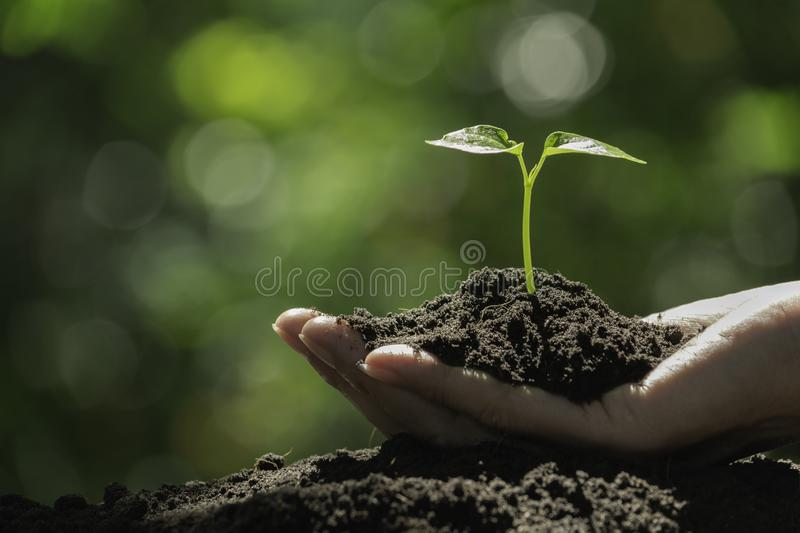 Hand holding a green and small plant. Green fresh plants on nature background royalty free stock photos