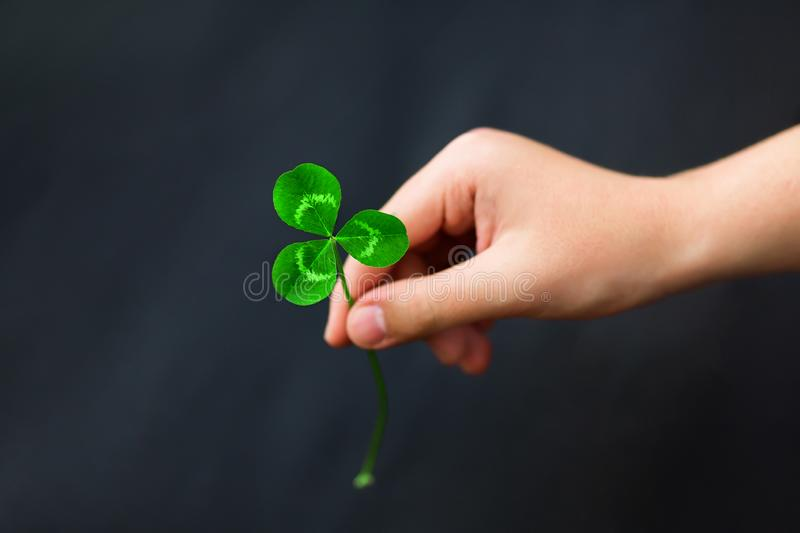 A hand is holding a green three-leaf clover on a black dark background. Close-up. Detailed royalty free stock photography