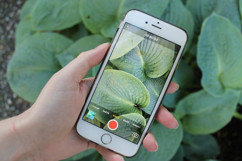 IPhone photographing. Hand holding an iphone photographing big green leaves stock images
