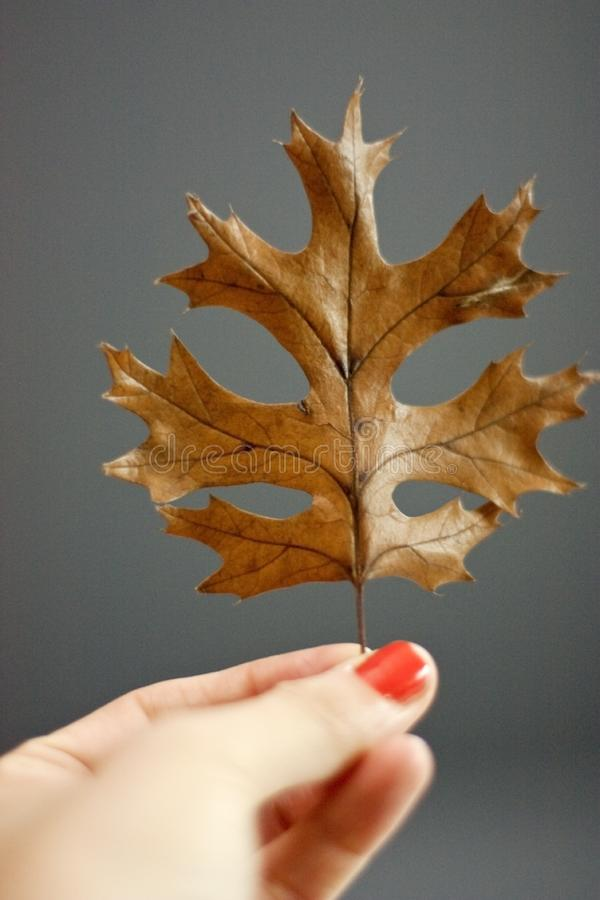 A Hand Holding A Leaf royalty free stock image