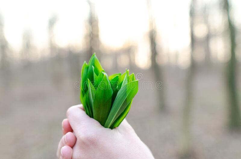 Hand Holding Leek Leaves Free Public Domain Cc0 Image