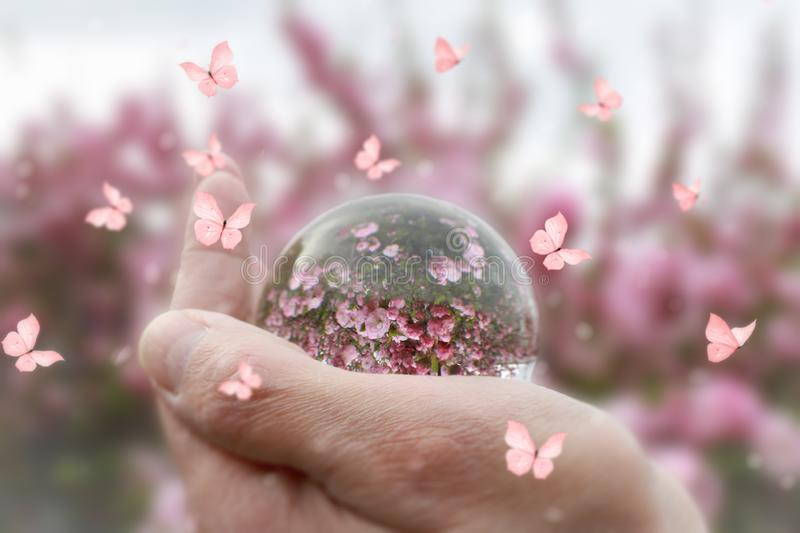 Hand holding a lens ball reflecting pink flowers stock photo