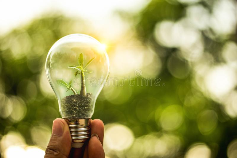 Hand holding a light bulb with growth of tree inside. Creative idea for save energy concept or global warming with natural bokeh royalty free stock images