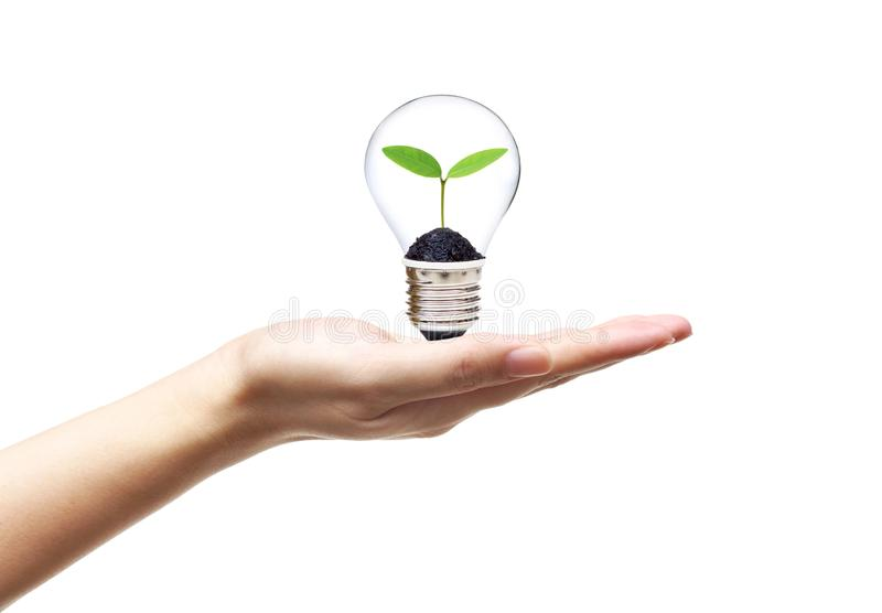 Green energy for sustainable living. Hand holding a light bulb with a young green plant growing inside / Green energy for sustainable living concept stock photography