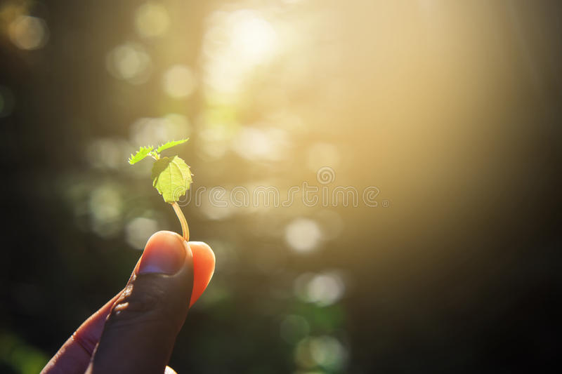 Hand holding a little sprout with sunrise. stock photography